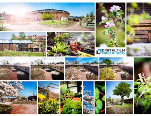 Fotodokumentation Rehabträdgård